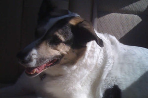 Goodbye, Cybil Shepherd