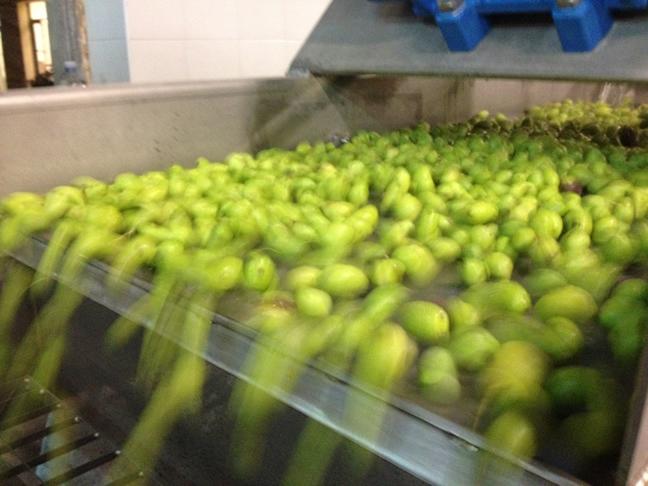 11-17-14-sicilian-olive-oil-3