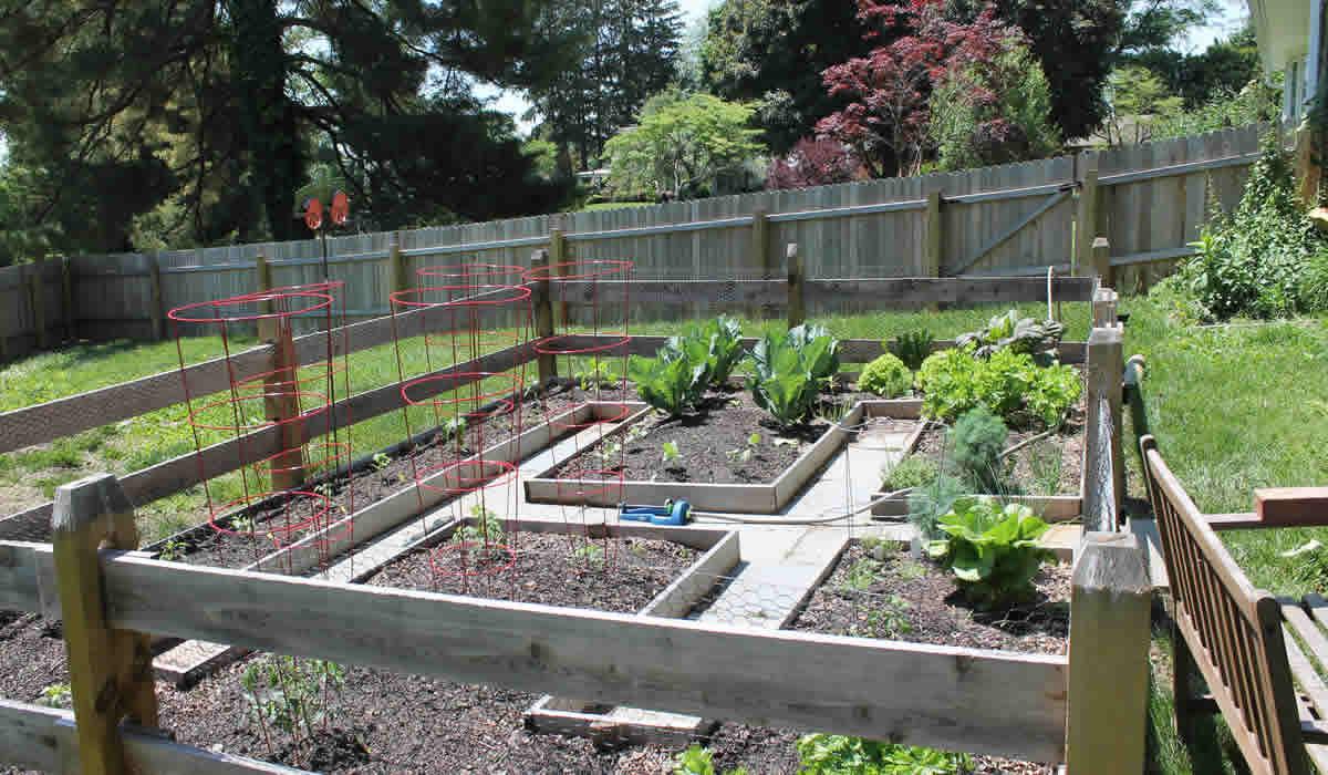 05-29-16-garden-cooking-3
